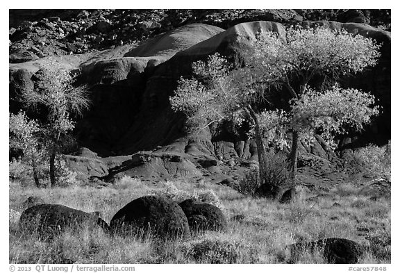Basalt boulders, Cottonwoods in autumn, cliffs. Capitol Reef National Park (black and white)