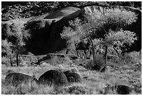 Basalt boulders, Cottonwoods in autumn, cliffs. Capitol Reef National Park, Utah, USA. (black and white)