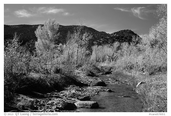 Pleasant Creek in autumn. Capitol Reef National Park (black and white)