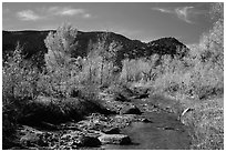 Pleasant Creek in autumn. Capitol Reef National Park, Utah, USA. (black and white)