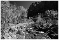 Pleasant Creek, cottowoods, and cliff in autumn. Capitol Reef National Park, Utah, USA. (black and white)