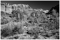 Cottonwoods and desert plants in autumn near Pleasant Creek. Capitol Reef National Park, Utah, USA. (black and white)