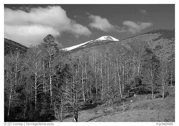 Trees and mountains, Baker Creek, morning spring. Great Basin National Park (black and white)