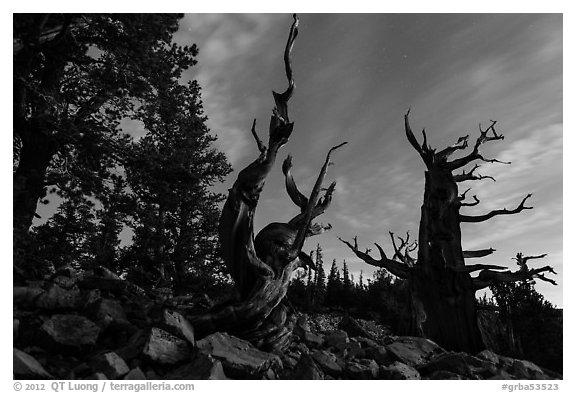 Bristlecone pine trees at twilight, Wheeler cirque. Great Basin National Park (black and white)