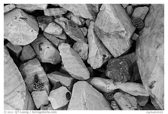 Ground close-up with quartzite blocks and bristlecone pine cones. Great Basin National Park (black and white)