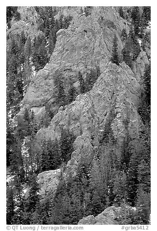 Limestone towers and pine trees near Lexington Arch. Great Basin National Park (black and white)