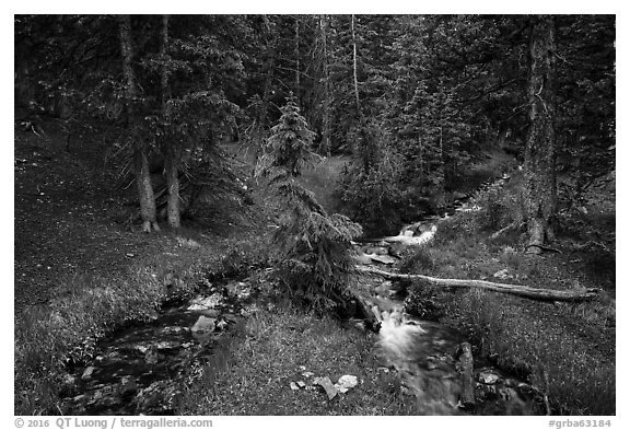 High elevation creek in summer. Great Basin National Park (black and white)