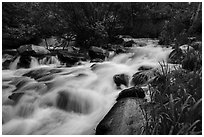 Baker Creek. Great Basin National Park ( black and white)