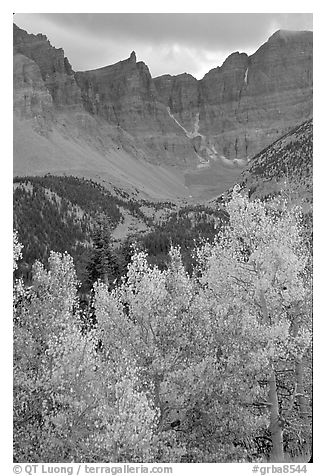 Aspens in fall color and Wheeler Peak. Great Basin National Park (black and white)