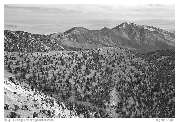 Mountains covered with Bristlecone Pines near Mt Washington, morning. Great Basin National Park (black and white)