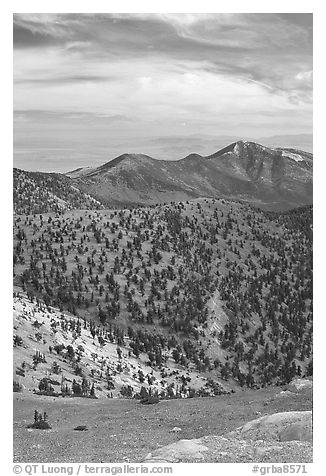 Slopes covered with Bristlecone Pine trees seen from Mt Washington, morning. Great Basin National Park (black and white)