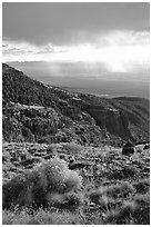 Sage covered slopes above Spring Valley. Great Basin National Park, Nevada, USA. (black and white)