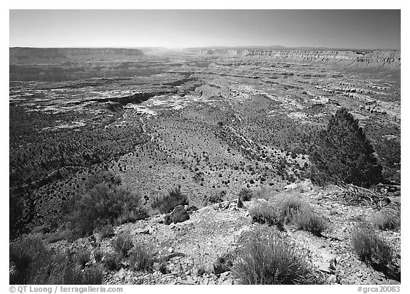 The Esplanade from the North Rim, morning. Grand Canyon  National Park (black and white)