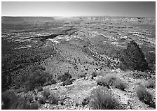 Esplanade from  North Rim, morning. Grand Canyon National Park ( black and white)