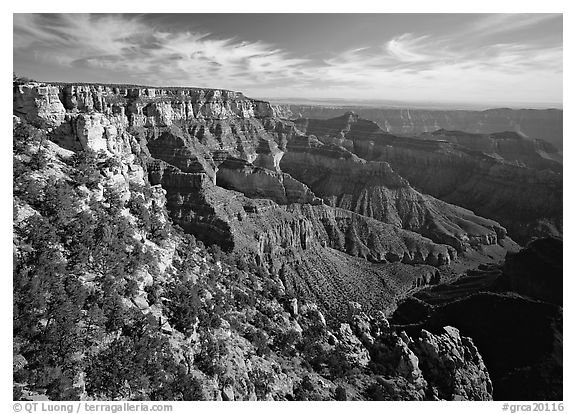 Rim near Cape Royal. Grand Canyon  National Park (black and white)