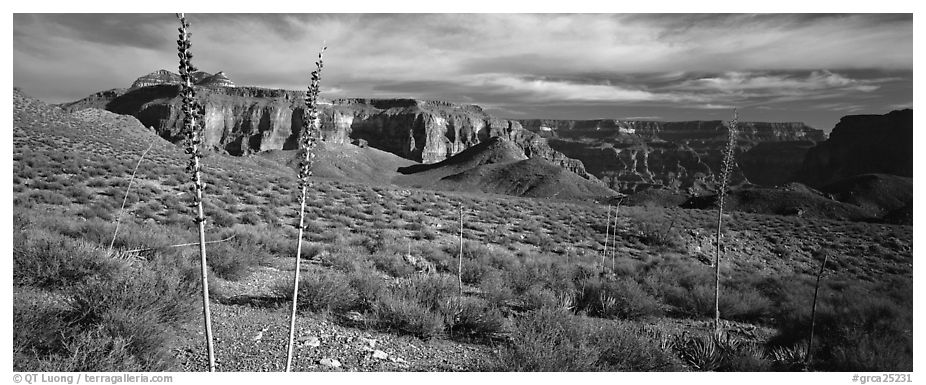 Inner Canyon scenery. Grand Canyon National Park (black and white)