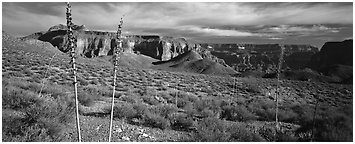 Inner Canyon scenery. Grand Canyon National Park (Panoramic black and white)