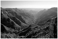 Lush side canyon, North Rim. Grand Canyon National Park, Arizona, USA. (black and white)