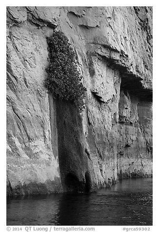 Vegetation clinging on cliff above river. Grand Canyon National Park (black and white)