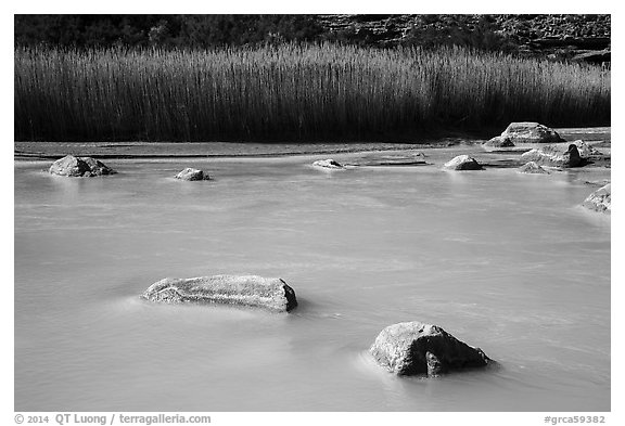 Rocks, reeds, and Little Colorado River. Grand Canyon National Park (black and white)