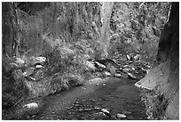 Stream and riparian environment, Clear Creek. Grand Canyon National Park ( black and white)