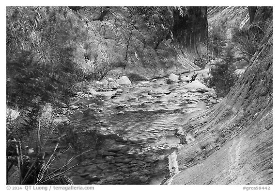 Gorge and riparian environment, Clear Creek. Grand Canyon National Park (black and white)