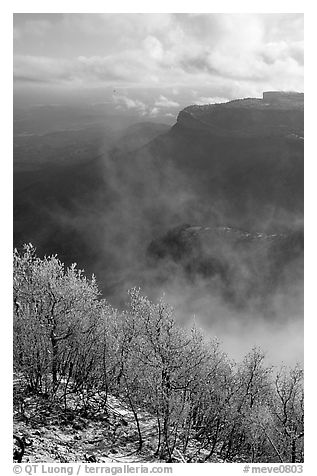 Snowy trees, cliffs, and clearing storm, Park Point, morning. Mesa Verde National Park (black and white)