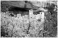 Trees and Cliff Palace, morning. Mesa Verde National Park ( black and white)