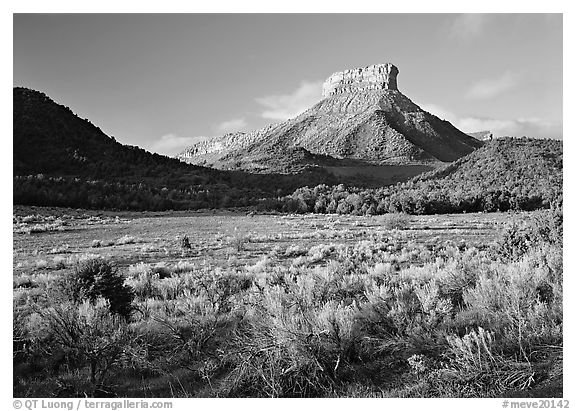 Meadows and Lookout Peak, early morning. Mesa Verde National Park (black and white)