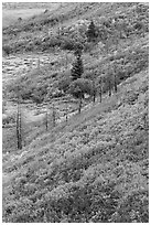Fall color over shrub slopes. Mesa Verde National Park, Colorado, USA. (black and white)