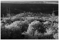 Trees, shrubs, and cliff shadow, early morning. Mesa Verde National Park ( black and white)
