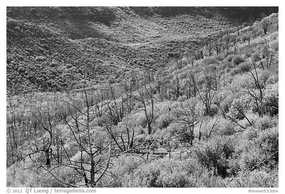 Canyon with burned trees and brush in fall colors. Mesa Verde National Park (black and white)