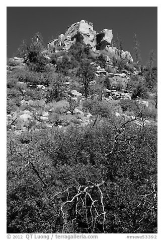 Outcrop with shurbs in fall foliage. Mesa Verde National Park (black and white)