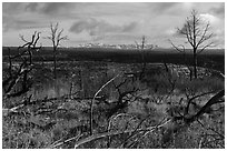 Burned trees and mountains from Wetherill Mesa. Mesa Verde National Park ( black and white)