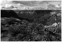 Canyon from rim, Wetherill Mesa. Mesa Verde National Park ( black and white)