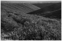 Gambel oak and Utah serviceberry brighten Wetherill Mesa slopes in autumn. Mesa Verde National Park ( black and white)