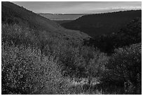 Autumn foliage of  Mountain shrub community, Wetherill Mesa. Mesa Verde National Park ( black and white)