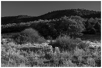 Frozen grasses and oaks. Mesa Verde National Park ( black and white)