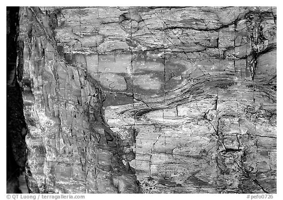 Colorful fossilized log close-up. Petrified Forest National Park (black and white)