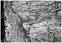 Colorful fossilized log close-up. Petrified Forest National Park, Arizona, USA. (black and white)