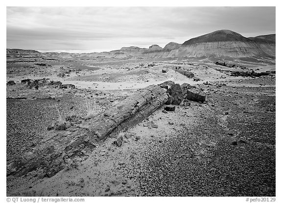 Long petrified log, and Chinle Formation rocks, Long Logs area. Petrified Forest National Park (black and white)