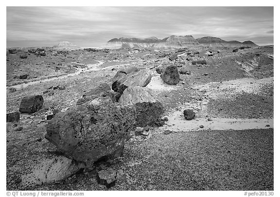 Colorful petrified wood section and badlands. Petrified Forest National Park (black and white)