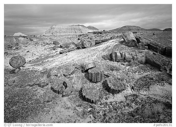 Petrified log and prehistoric-looking badlands. Petrified Forest National Park (black and white)