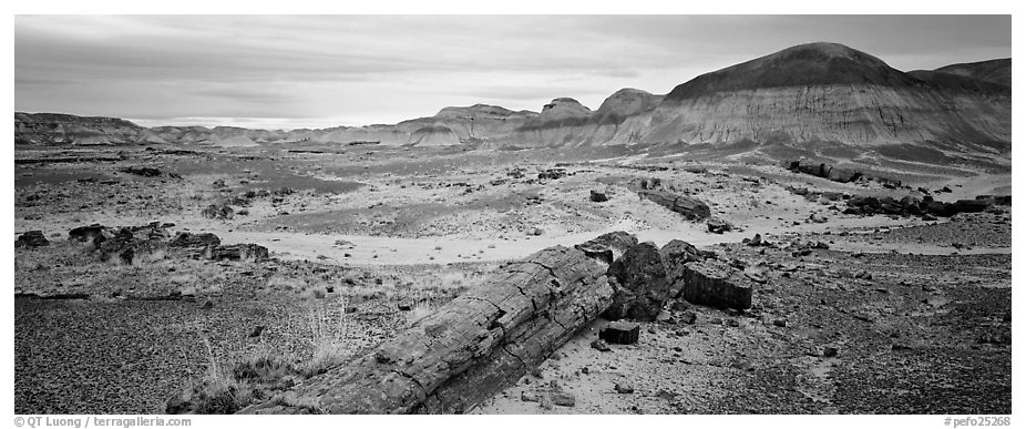 Prehistoric landscape with petrified truncs. Petrified Forest National Park (black and white)