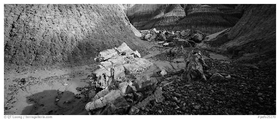 Petrified logs scattered in Blue Mesa badlands. Petrified Forest National Park (black and white)
