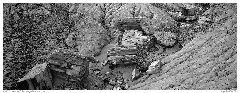 Petrifed logs in badland folds. Petrified Forest National Park (black and white)