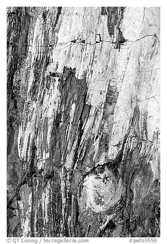 Detail of Triassic Era fossilized wood. Petrified Forest National Park (black and white)