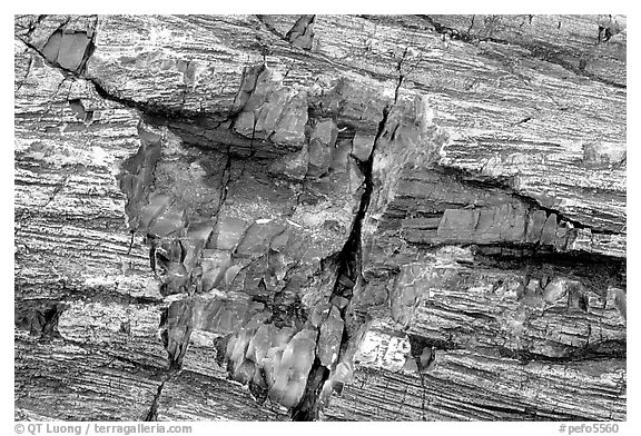 Petrified log detail with bark. Petrified Forest National Park (black and white)