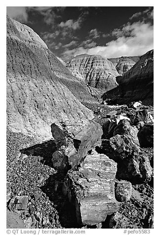 Colorful fossilized logs in Blue Mesa, afternoon. Petrified Forest National Park (black and white)