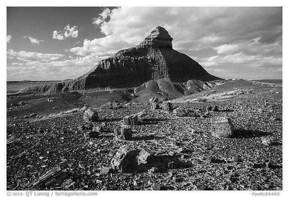 Petrified wood and Salomons Throne. Petrified Forest National Park (black and white)